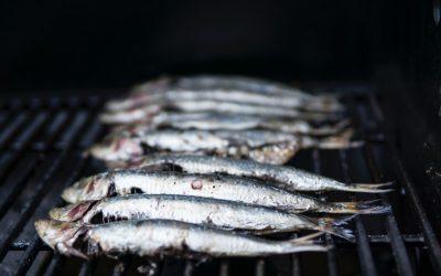 Plave riba – fuzija tradicije i suvremenosti